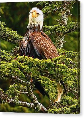Wet Head Canvas Print by David Wagner