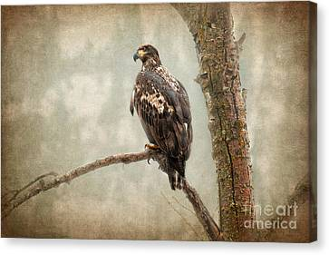 Wet N Wild  Canvas Print by Beve Brown-Clark Photography