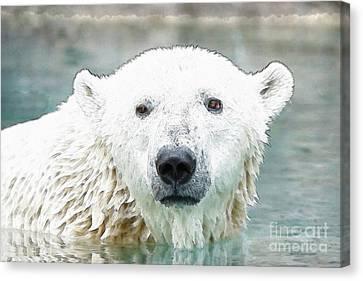Wet Polar Bear Canvas Print