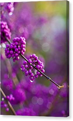 Abstract Water Fall Canvas Print - Wet Purple 2 by Mike Reid