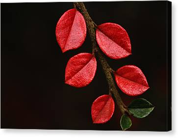 Wet Scarlet Canvas Print