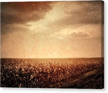 Wet Season Canvas Print by Wim Lanclus