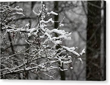Wet Snow Canvas Print
