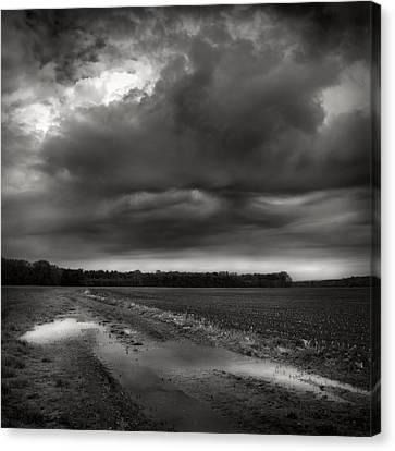Wet Spring Canvas Print by Jaromir Hron