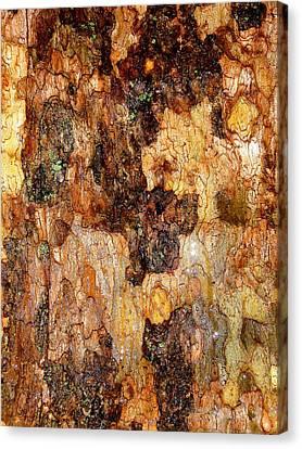 Wet Tree Bark 1 Canvas Print by Beth Akerman