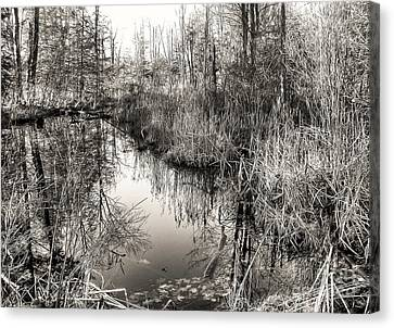 Canvas Print featuring the photograph Wetland Essence by Betsy Zimmerli