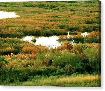 Wetland Beauty Canvas Print