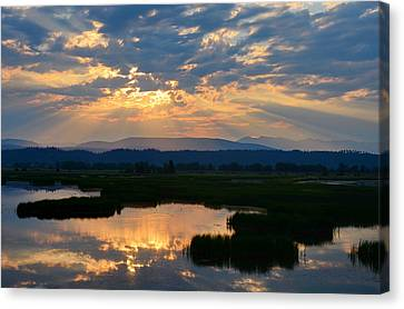 Wetlands Dawn Canvas Print by Annie Pflueger