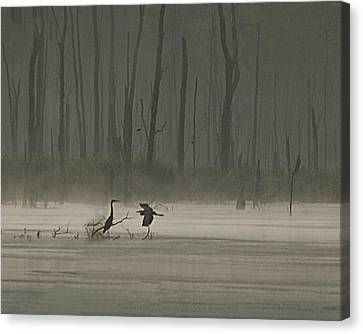 Wetlands Morning Canvas Print