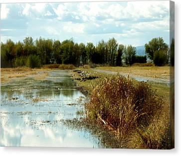 Wetlands Canvas Print by Pamela Patch