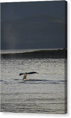 Whale In Alaskan Waters Canvas Print by Don Wolf