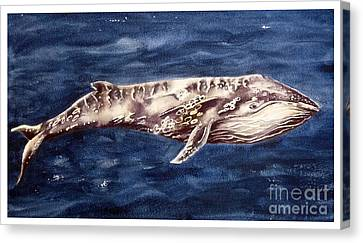 Humpback Whale Canvas Print by Marie Burke