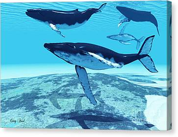 Whale Pod Canvas Print by Corey Ford