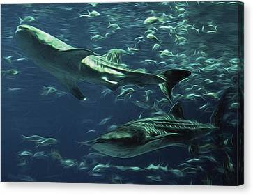 Whale Shark Couple Canvas Print