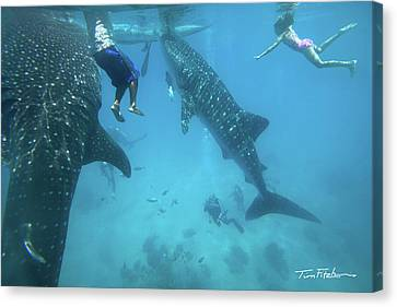 Whale Sharks Canvas Print