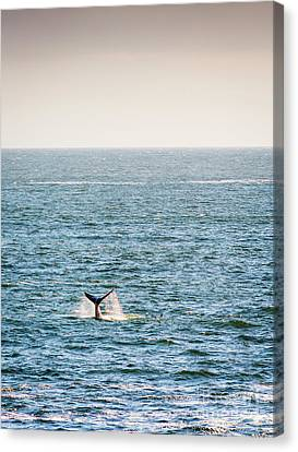 Whale Tail On Horizon Canvas Print by Tim Hester