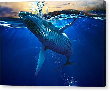 Whale Watching Art Canvas Print by Marvin Blaine