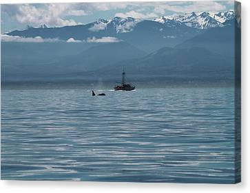 Whale Watching In The Strait Of Juan De Fuca Canvas Print by Dan Sproul