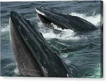 Whales Canvas Print by Miranda Cobo