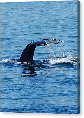 Whales Tale Canvas Print by Lisa Kane