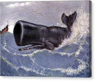 Whaling For Sperm Whale 20th Century Canvas Print by Science Source