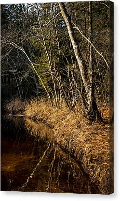 Wharton Forest Fall Canvas Print