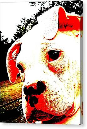 What A Face Canvas Print by Beth Akerman