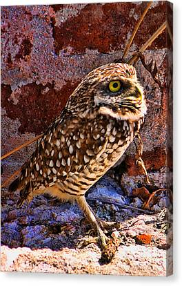 What Big Eyes I Have Canvas Print