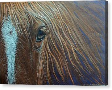 What He Can See Canvas Print by Linda Nielsen