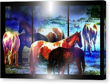 What  Horses Dream Canvas Print by Hartmut Jager