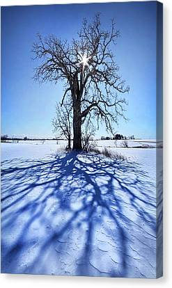 Canvas Print featuring the photograph What I Am, What I Was, What I Will Be by Phil Koch