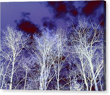 Canvas Print featuring the photograph What Lies Above by Shana Rowe Jackson