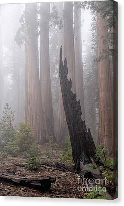 Canvas Print featuring the photograph What Lurks In The Forest by Peggy Hughes