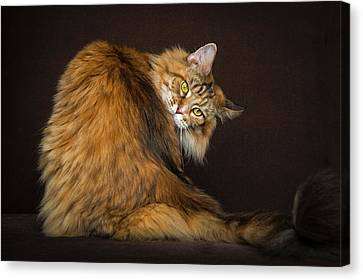 What? Canvas Print