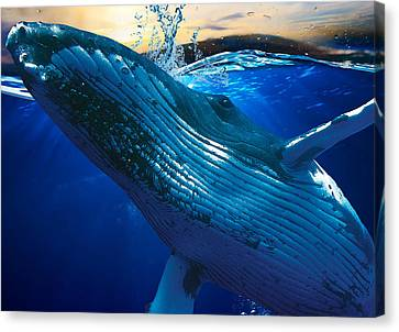 Whate Watching Art Canvas Print by Marvin Blaine