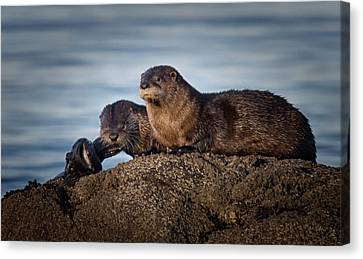 Canvas Print featuring the photograph Whats For Dinner by Randy Hall