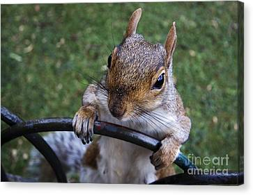 whats Up Canvas Print