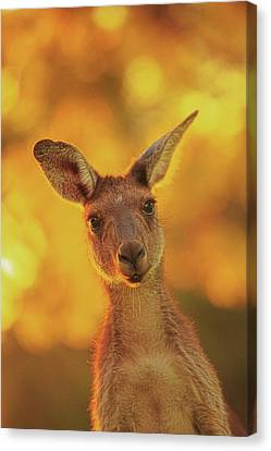 Canvas Print featuring the photograph What's Up, Yanchep National Park by Dave Catley