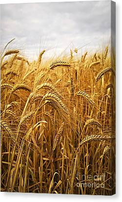 Produce Canvas Print - Wheat by Elena Elisseeva