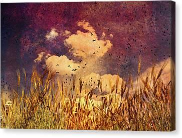 Wheat Field Dream Canvas Print by Bob Orsillo