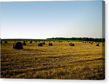 Canvas Print featuring the photograph Wheat Field by Gary Smith