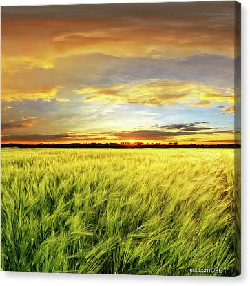 Wheat Field With Sunset Canvas Print by ©jesuscm