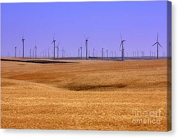 Wheat Fields And Wind Turbines Canvas Print by Carol Groenen