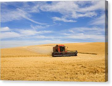 Wheat Harvest Canvas Print by Mike  Dawson