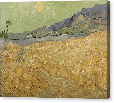 Wheatfield With Reaper Canvas Print by Vincent Van Gogh