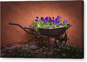 Wheelbarrow Full Of Pansies Canvas Print by Christina Lihani