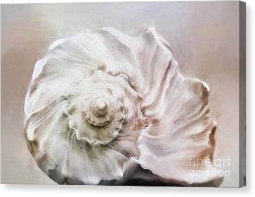 Canvas Print featuring the photograph Whelk Shell by Benanne Stiens