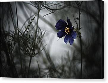 When Cosmos Will Be Blue Canvas Print by Fabien Bravin
