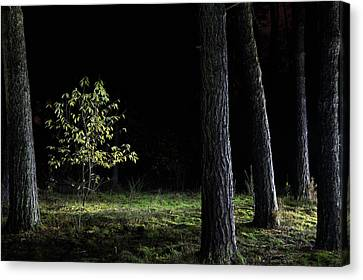 Canvas Print featuring the photograph When First Leaves Start To Fall - Autumn by Dirk Ercken