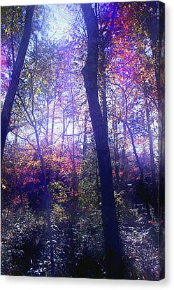 When Forests Dream Canvas Print by Nina Fosdick